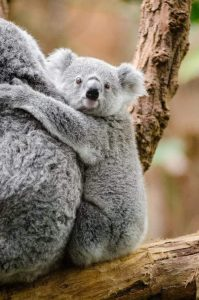 Get close and personal with Australian animals