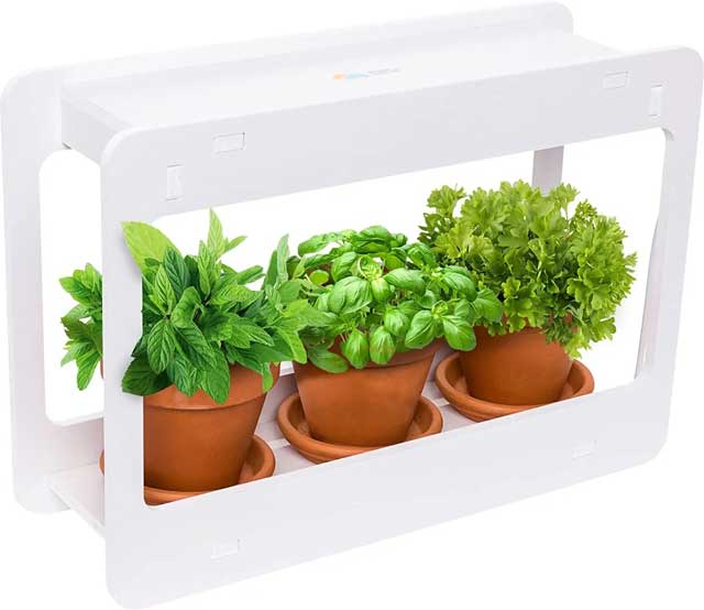 Small Indoor Boxes for Herbals