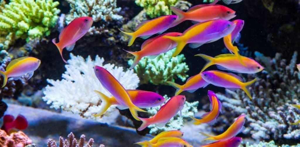 Characteristics of Good Beginner Corals for a Home Reef Tank